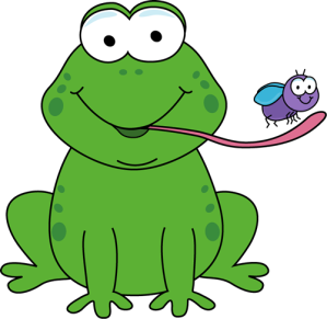 frog-eating-fly